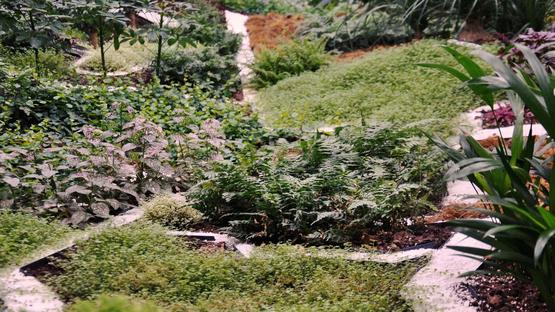 cafet plantes